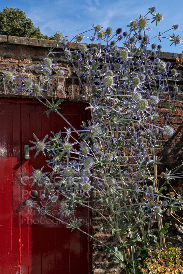 Red Door Tullie House Carlisle